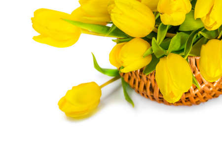 Yellow tulip flowers photo