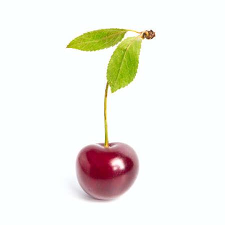 bing: Fresh cherry fruits on the white  Stock Photo