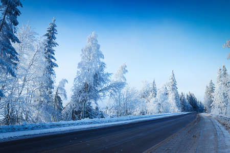Russian winter forest in snow and ice photo