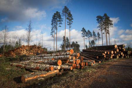 agricultura: Deforestaci�n cortado �rboles para la construcci�n en el bosque