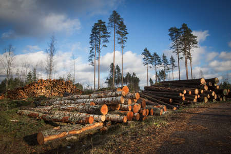 timber: Deforestation cutted trees for construction in the forest