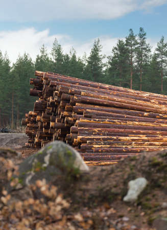 deforestation: Deforestation