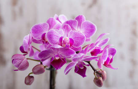 purple orchid: Purple orchid Stock Photo