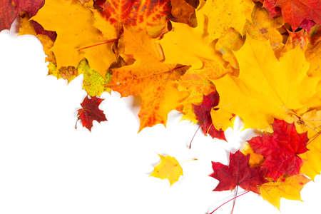 feuillage: Automne chute des feuilles sur fond blanc