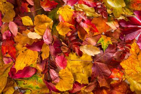 Autumn fall leaves background Foto de archivo