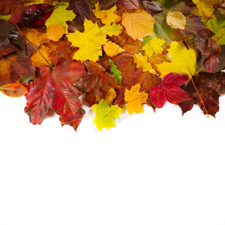Autumn fall leaves on white background