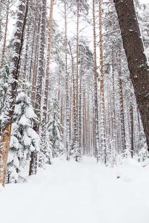 snow road: russian Winter forest snow road in winter Stock Photo
