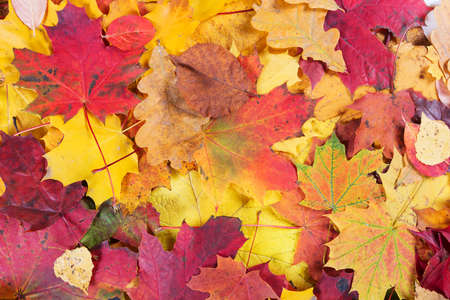 Autumn fall leaves background Stock fotó