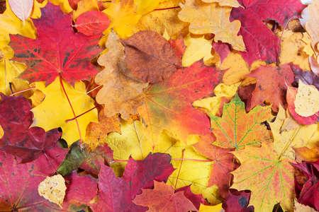 hojas secas: La caída del otoño deja el fondo Foto de archivo