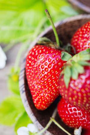 juicy: Fresh juicy sweet strawberries in the garden