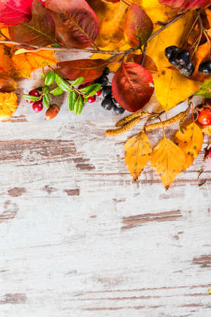 colorful leaves: Autumn fall leaves background Stock Photo