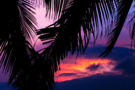 Asia exótica puesta de sol tropical cerca de las palmas y la orilla de la playa del mar