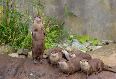 Lovely pretty playful otters have fun outdoors nature