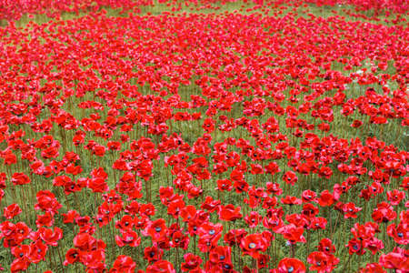 Ceramic poppies installation for Remembrance Day at the Tower of London Stock Photo