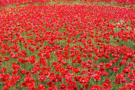 Keramische klaprozeninstallatie voor Remembrance Day in de Tower of London