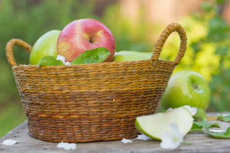 Fresh sweet juicy red and green apples with flowers on a wooden  in garden Stock Photo