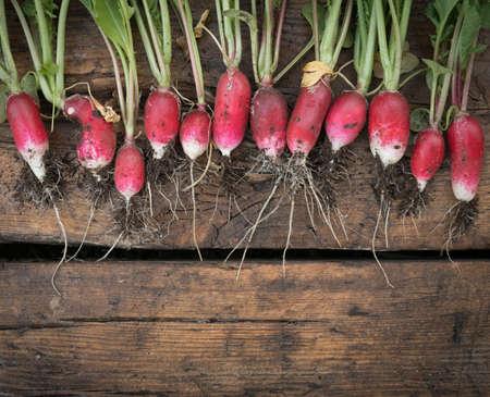 Still life fresh radish vegetables harvest crop  on wood