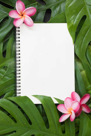 Tropical top view summer botanical concept still life white frame with monstera liana, vine, palm leaves and plumeria frangipani flower flat lay layout