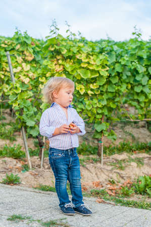 moccasins: Outdoor portrait of a cute toddler boy in jeans, shirt and moccasins, standing against vineyards Stock Photo
