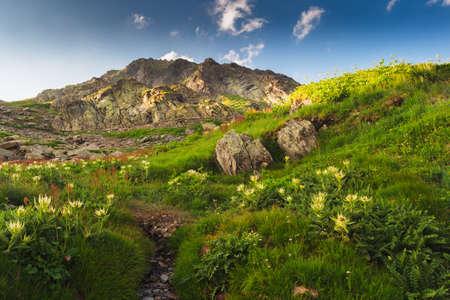 saint bernard: Swiss Alps, Grand Saint Bernard, summer landscape