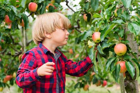 Schattige kleine blonde jongen spelen in de appelboomgaard in de vroege herfst