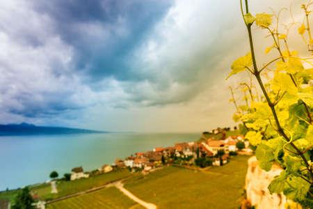 leman: Vineyards of the Lavaux region over lake Leman (lake of Geneva), toned image Stock Photo
