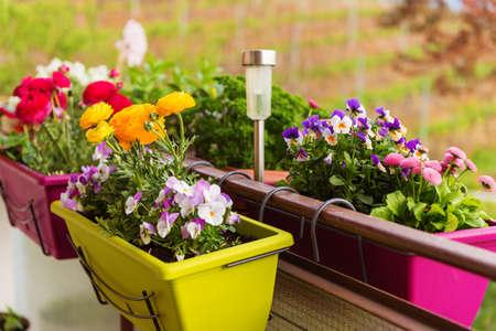 バルコニーの植木鉢にカラフルな花 写真素材