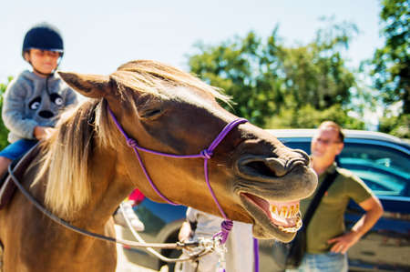 yellow teeth: Laughing horse with big yellow teeth  at the country fair Stock Photo