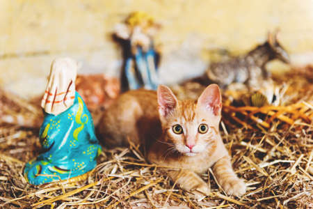 Cute little orange kitten playing in old church between figurines of Jesus and Mary Stock Photo