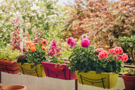Colorful flowers growing in pots on the balcony Imagens