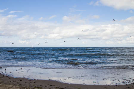 wild white sea gull ocean sea bird flying over sea the wing show freedom of life white blue tone nature seascape landscape background
