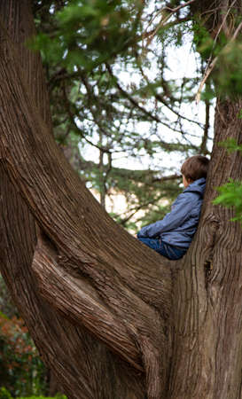 Portrait of cute kid boy sitting on the big old tree on sunny day. Child climbing a tree. little boy sitting on tree branch. Outdoors. Sunny day. Active boy playing in the garden. Lifestyle concept Standard-Bild