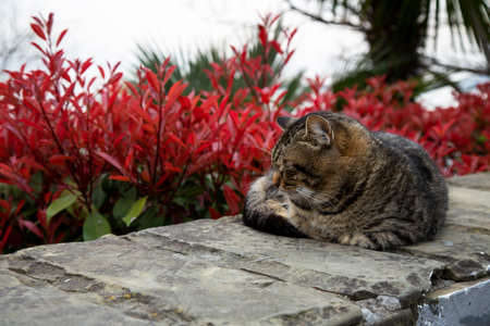 Street cat is sleeping on the embankment stone on a Sunny day in spring
