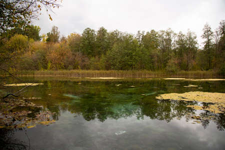 The shore of the lake in the autumn forest. Autumn landscape.