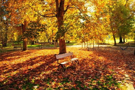 Autumn park with yellow and red foliage and benches photo