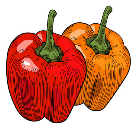 Coloful peppers, illustration, vector on white background. Vettoriali
