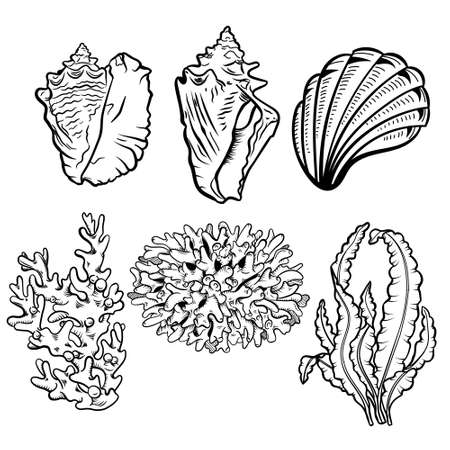 Marine life hand drawn vector illustration set. Seashells, scallops freehand drawings. Corals, reef ecosystem fauna, seaweeds, laminaria engraved outlines.