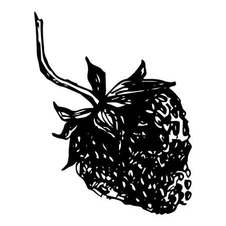 Vector isolated element, strawberry. Hand drawn doodle. Ilustracja