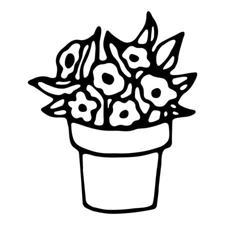 Vector isolated element. Illustration with garden flower in a pot. Gardening. Hand drawn doodle.
