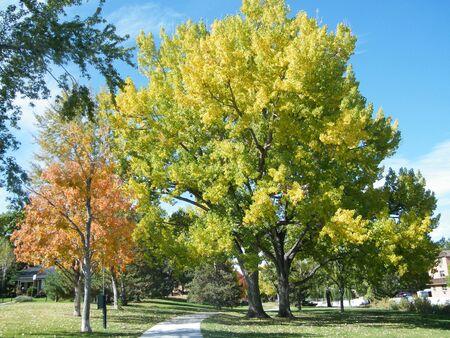 Een pad door de bomen Stockfoto