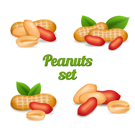 unpeeled: Peanuts isolated on white, stock graphic illustration