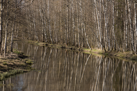 In spring the trees are reflected in silty water