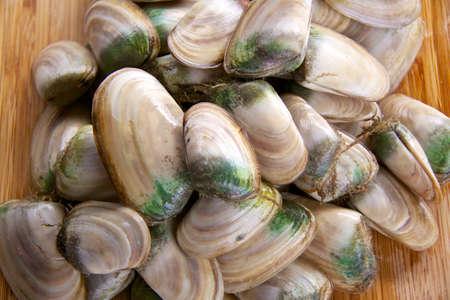 molluscs: Fresh New Zealand molluscs - pipi