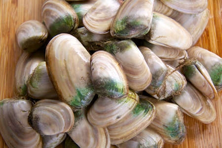 Fresh New Zealand molluscs - pipi