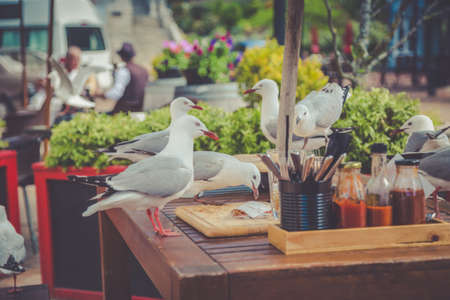 table scraps: Seagulls at the outdoor cafe table picking up scraps after someones lunch in Nelson, New Zealand