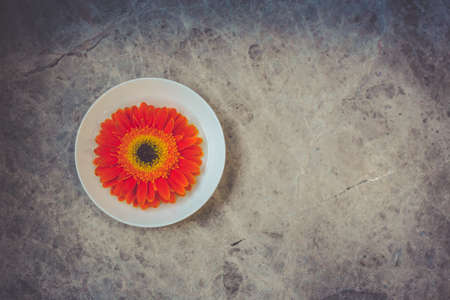 lonelyness: Single bright orange gerbera flower contrasting with round white plate on grey stone background. Symmetrical orange flower on a white plate. Stock Photo
