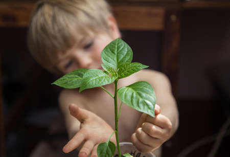 little boy lovingly touches pepper seedlings. little assistant - a gardener. Grow seedlings. Preparing for spring planting in the garden. The child is out of focus. Eco education
