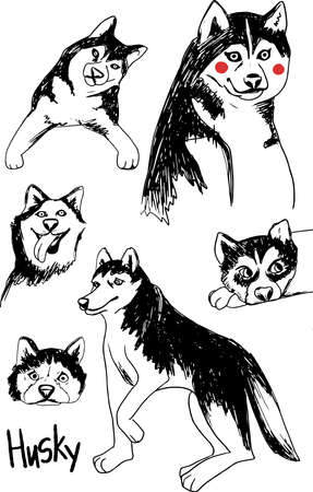 Cute siberian Husky set, white and black purebred dog animal in various poses. Hand drawn vector Illustration on a white background