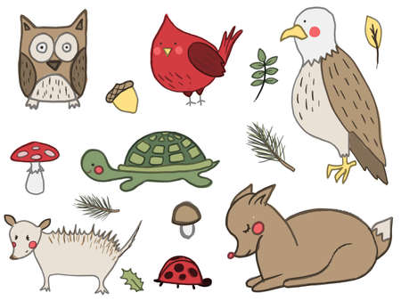 A set of hand drawn cute forest animals. Deer, american eagle, owl, red cardinal bird, mushroom, acorn, opossum. Vector collection perfect for childish decoration clothes, patterns,stickers, cards Illustration
