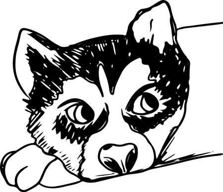 Husky siberiano di vettore isolato su priorità bassa bianca. Schizzo di inchiostro disegnato a mano dell'annata con cane ritratto.